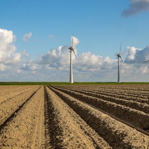 Permacultura: pasos firmes hacia la sostenibilidad